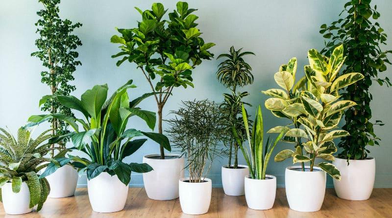 Cómo dejar de matar tus plantas de interior